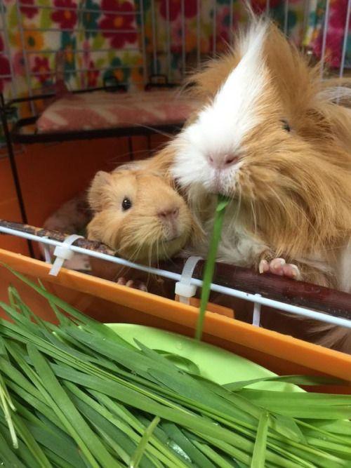 Piggy Mommy & Baby