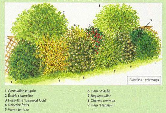 Des arbustes pour une haie champêtre