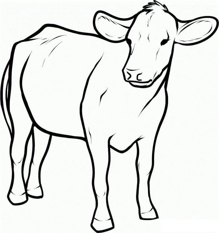 cow coloring pages dairy cow Coloring4free - Coloring4Free.com | 744x700