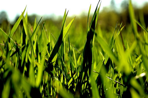 Deep Green Grass Print 16x24 by BennyKaufmann on Etsy, $49.95