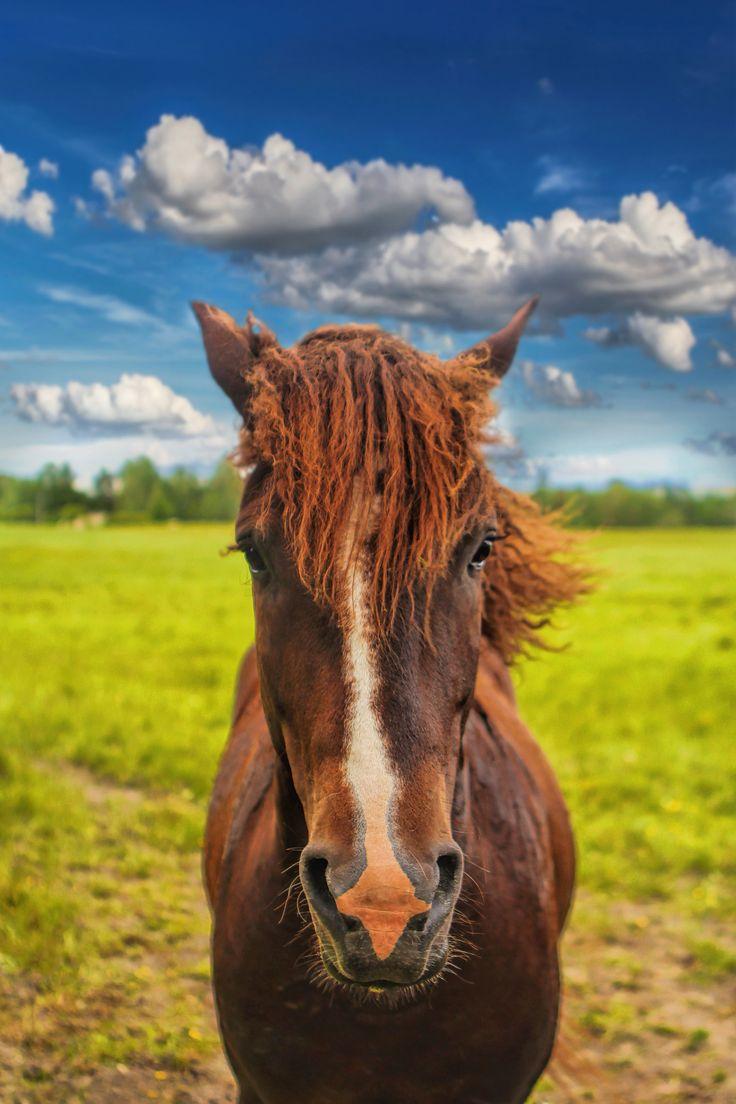 Horse portrait by Marko Ikonen on 500px