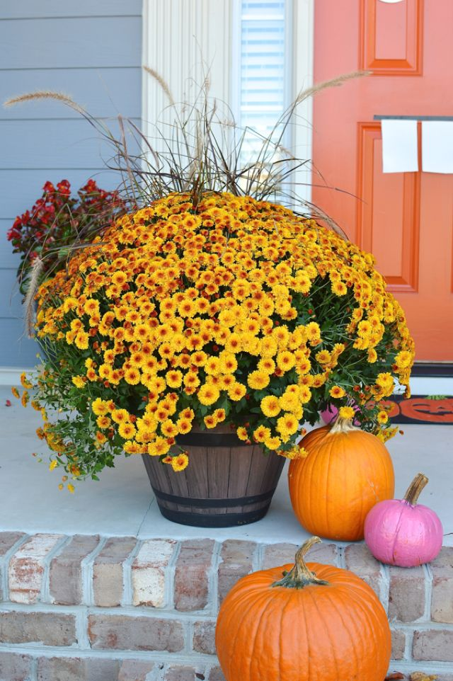 oversized mums and pumpkins dress up the front porch
