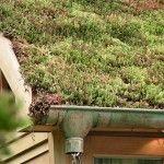 Les bienfaits et les avantages d'un toit vegetal.