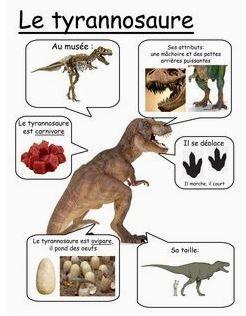 Les fiches sciences de quelques dinosaures