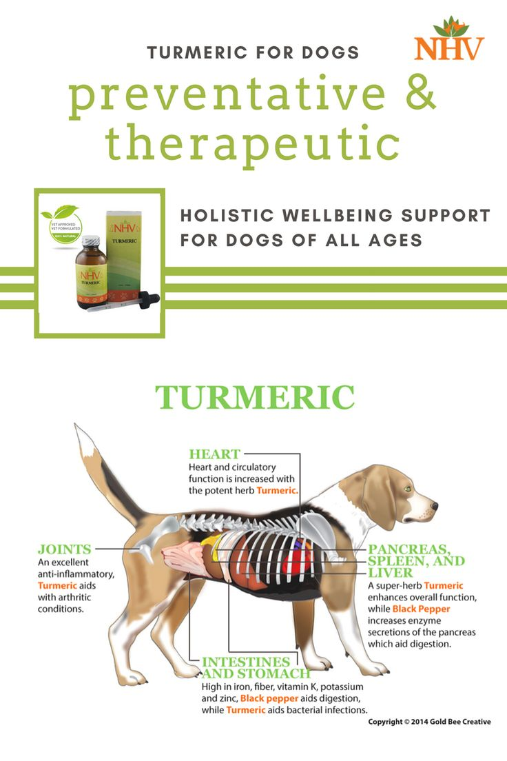Cancer herbs for dogs - Turmeric Is A Natural Herbal Supplement Promoting Heart Health Cancer Support For Your Dog