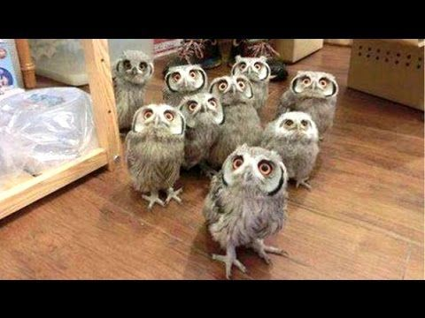A Funny Owls And Cute Owls Compilation || NEW