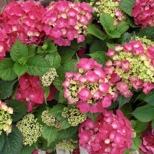 258 best images about plantes et arbres on pinterest for Achat plante