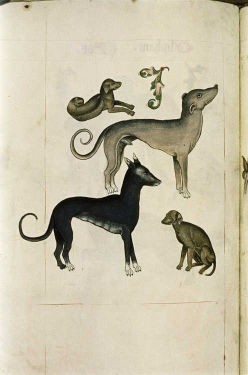 Hounds from The Tudor Pattern Book. Bodleian Library, MS. Ashmole 1504. Circa between 1520(1520) and 1530.