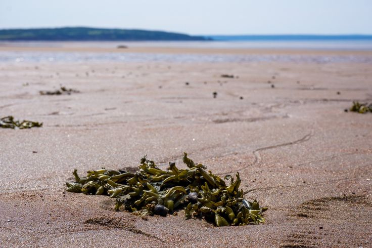 Waterside Beach (New Brunswick): Top Tips Before You Go - TripAdvisor