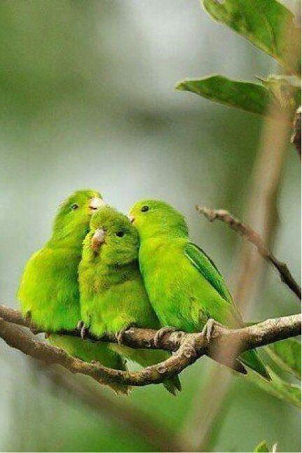..green beautiful friends