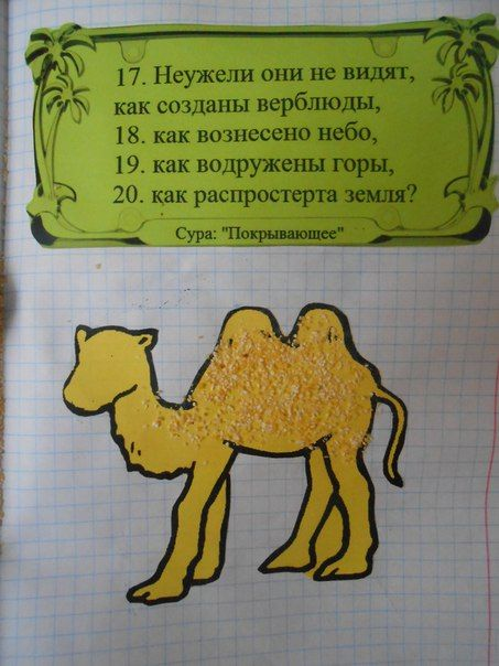 Animals in quran: camel