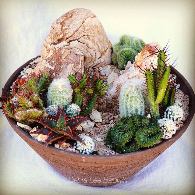 like my mini high desert succulent garden the step by step how