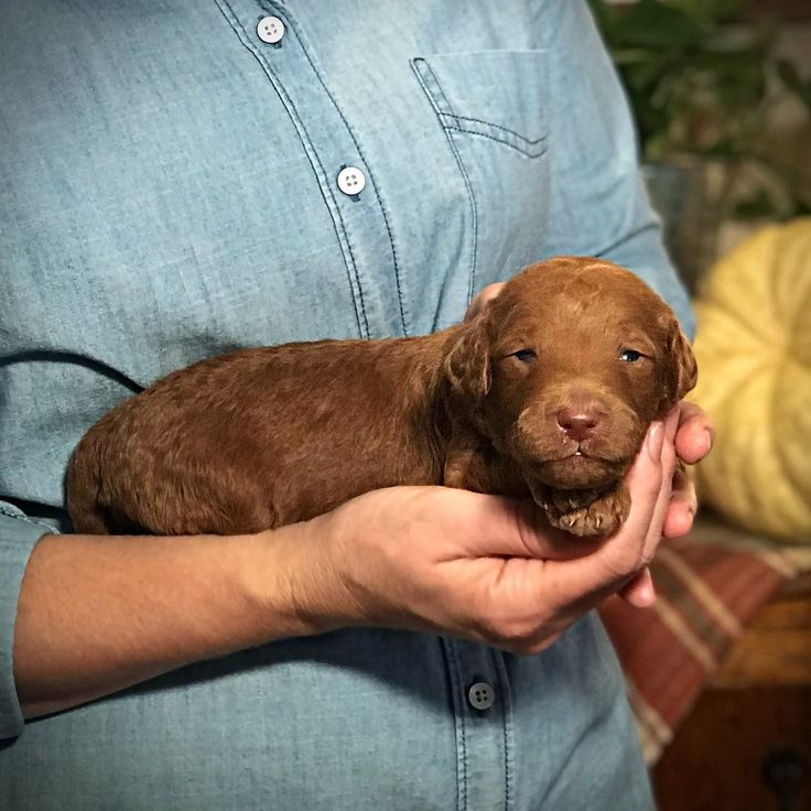 how to pick a puppy from a litter at 3 weeks