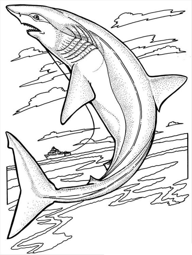 Free Printable Shark Coloring Pages For Kids Shark Coloring Pages Coloring Pages Mermaid Coloring Pages