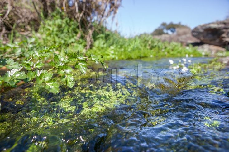 Stock image of 'Fluvial vegetation on the stream of Muelas River,   Cornalvo Natural Park, Extremadura, Spain'