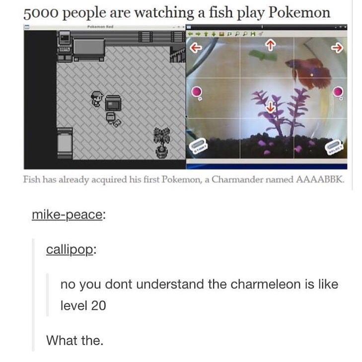 When a fish is better at video games than you