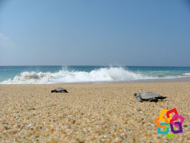 MICHOACÁN MÁGICO Si ha pensado en tener unas vacaciones diferentes, le recomendamos visitar playa Colola, un hermoso lugar en el que también puede practicar ecoturismo. Este lugar le ofrece una gran variedad de actividades de octubre a marzo ayudando a la tortuga negra que llega a estas playas a desovar, también puede bucear, pasear en lancha y practicar la pesca deportiva. HOTEL ESTEFANIA http://www.hotelestefania.com.mx/