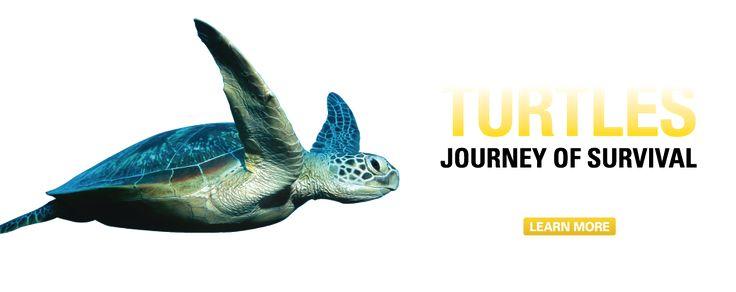 As 25 Melhores Ideias De Aquarium Camden No Pinterest