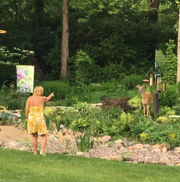 Женщина предъявляет претензии оленю, регулярно сжирающему птичий корм из кормушек