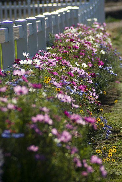 """""""My Fence Line"""" - Gotta love wildflowers!"""