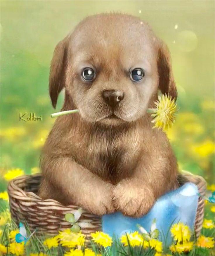 приятно животные с цветами гифки смешные сам себе