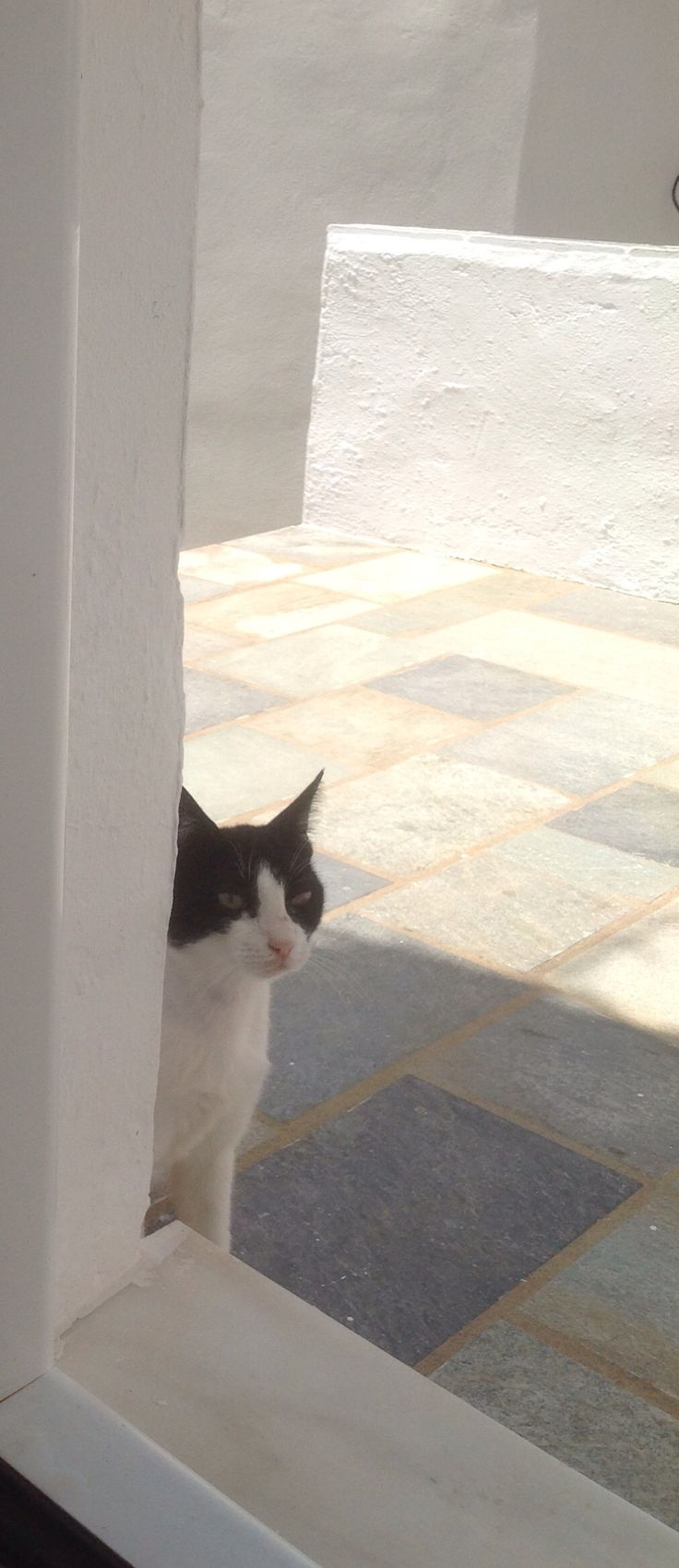Serifos cat July 2014