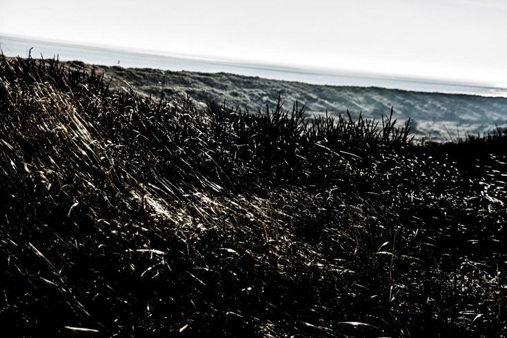 Windy dunes at Vlieland - picture made by Bart Lebesque