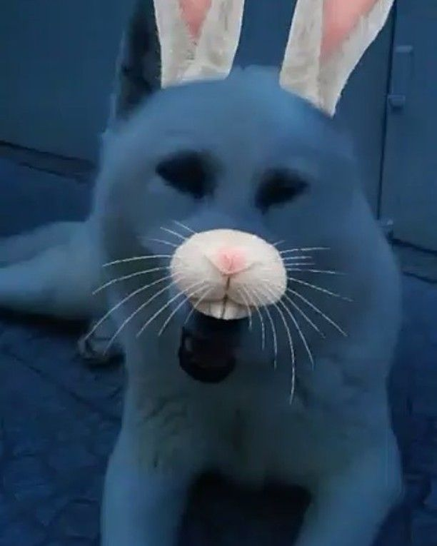 WEBSTA @ sofil88 - Ci e o carteiro 😂🐰🐺 👻 Snapchat: sofil88#elaéfofa #massópraquemmerece #snapchat #dogs #instadog #mybaby #myprincess #love #huskysiberian #huskysiberiano #ci #instadogs #mixofxolorsandpatterns #socute #cute #rabbit #coelho #ahah