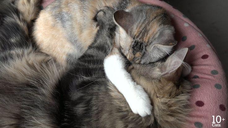 抱き合って寝てたのにカラスの鳴き声に起こされちゃった猫たち