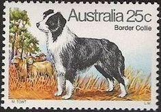 ◇Australia 1980 Border Collie stamp.