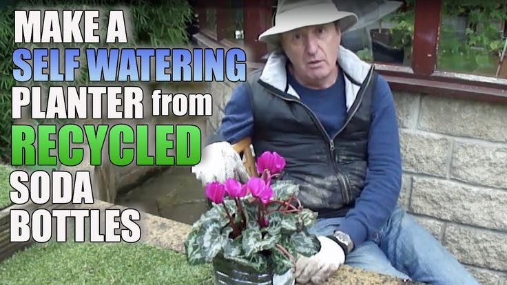 DIY self watering with recycled plastic soda bottles.