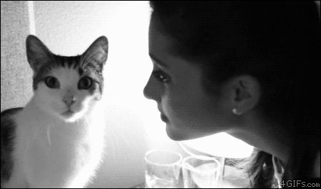 7 Best Cat Gifs of the Week – 29th November 2015 - We Love Cats and Kittens