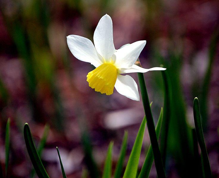 Fleur d'été au Domaine de Maizerets
