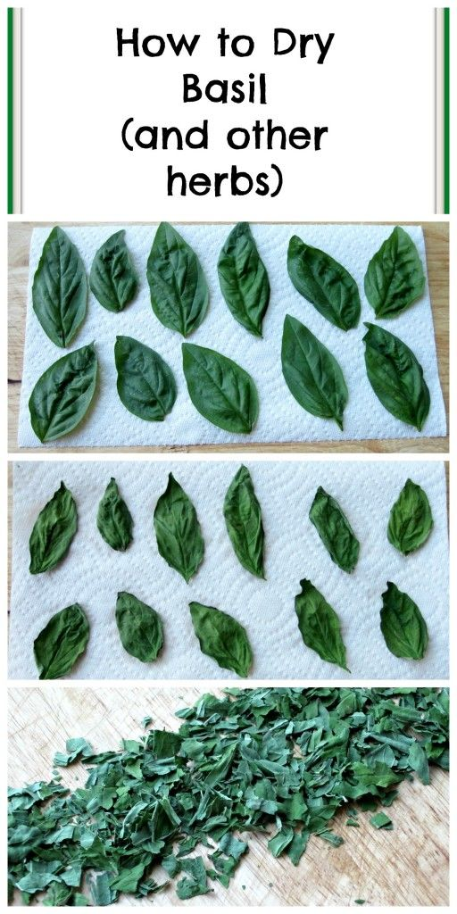 How to Dry Basil + Recipes using Basil- Such a great post!!