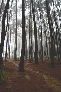 Juru Soca: Gunung Pancar (Ke dua kalinya) : Menikmati sajian ...