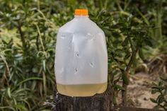 Homemade Fly Traps | syrup and vinegar Rinse out empty gallon milk/water jug. Cut multiple holes all over the jug about the size of pen caps. Do not cut any holes in the bottom 4 inches of the jug, where you will add solution. Pour 1 cup of syrup/molasses/fruit juice into container, then 1 cup of apple cider vinegar. Twist cap onto jug and place it in location where flies are heavy. Empty the jug every few days and refill, or toss the whole jug and start fresh with a new container.