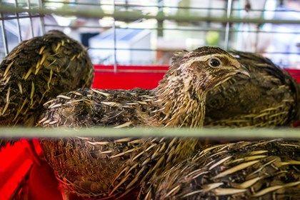 Ptaszyna na targach w Minikowie :)