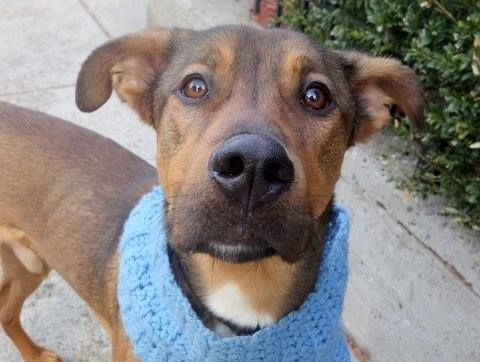 Manhattan Dog Adoption