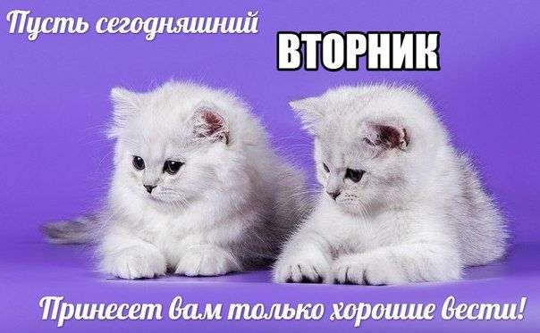 Открытки с добрым утром с кошками и собаками со вторником, контакте стену другу