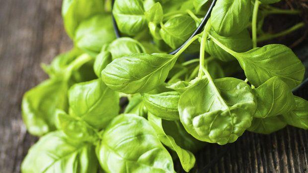 Máte letos díky slunnému a teplému počasí obzvláště velkou úrodu bazalky? Ano, je výborná do špaget nebo do caprese, ale uštípané rostlinky tak rychle dorůstají, že je možná nestíháte konzumovat. Přinášíme tedy několik tipů, jak tuto úžasnou rostlinku zpracovat i pro následující týdny a měsíce.
