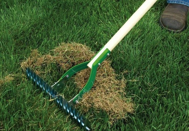 Dethatch the lawn by giving it a good once-over, using either a lawn rake with stiff tines or a special dethatching rake.