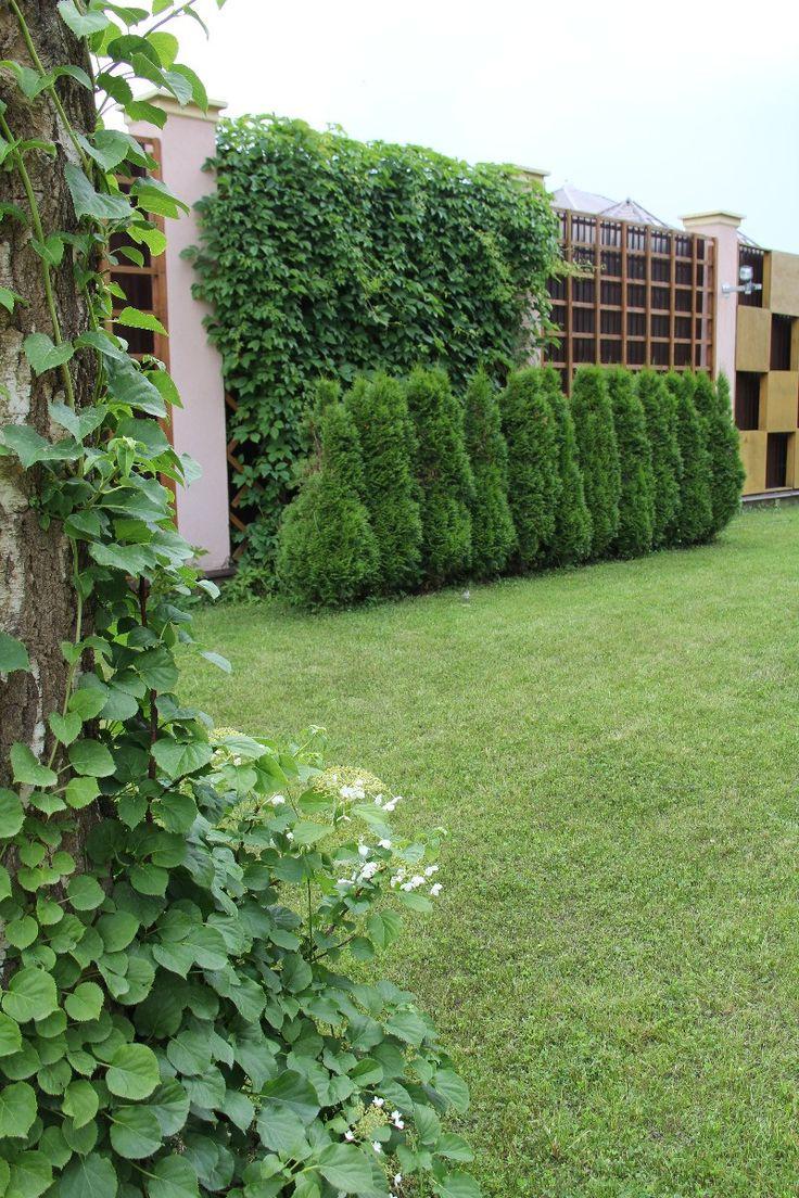 French tuteur trellis woodworking projects amp plans - Http Dh Art Ru Besceler Stenka_iz_vinograda Jpg Trellispergolas