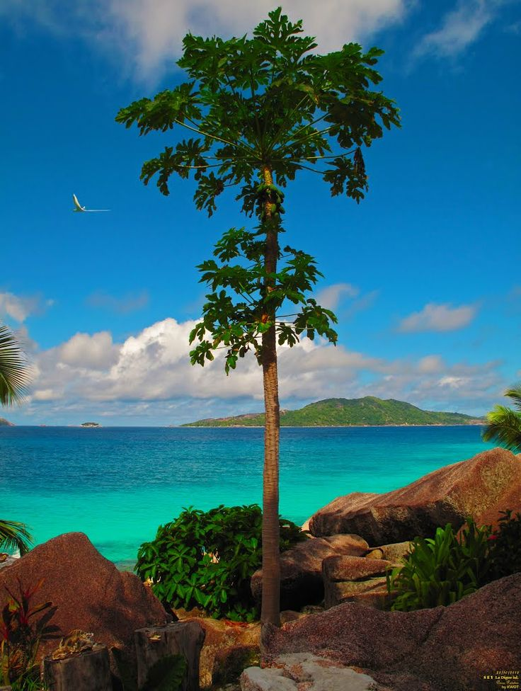 """SEY La Digue isl. Anse Patates (Coco ~ Felicite isl.)""; La Digue, Seychelles; by KWO Tsoumenis on Panoramio"