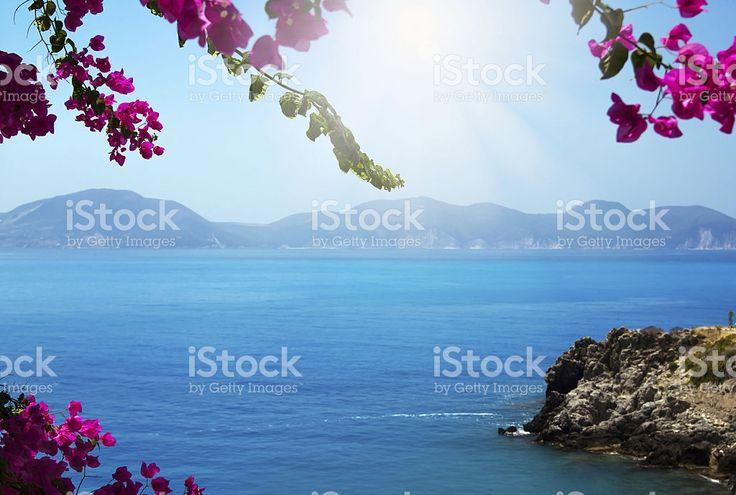 花フレームブルーの海 ロイヤリティフリーストックフォト