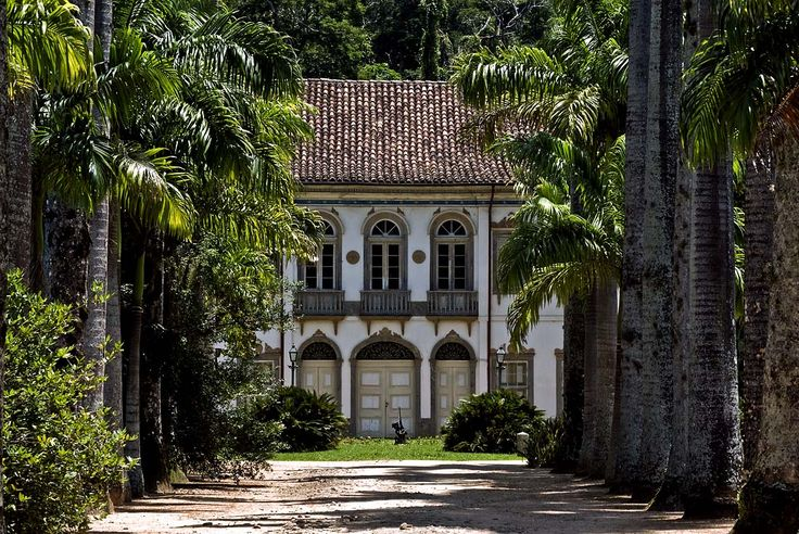 Fazenda Paraizo; Rio State | Coffee plantation