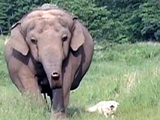 cbs assignment elephants