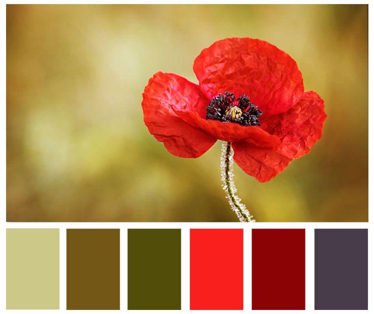Картина мак. Цветовые сочетания в интерьере.