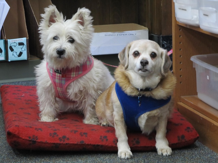 Sophie and Corky. Two little dogs with big hearts. Penny's brother and sister.