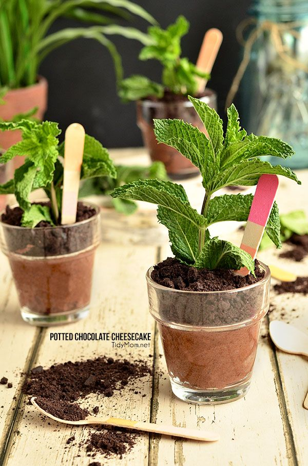 """These may look like darling potted herbs, but these pots of chocolate cheesecake sprout to life when they are topped with ground cookie """"dirt"""" and a sprig of fresh mint! Potted Chocolate Cheesecake {no bake} recipe at TidyMom.net"""