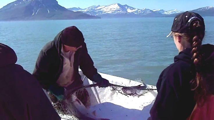 Petualangan Satu Keluarga Menjaring Ikan di Laut Alaska